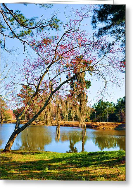Blossoms And Spanish Moss Greeting Card by Jan Amiss Photography