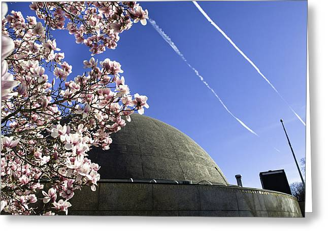 Blossoms Greeting Card by Andrew Kubica