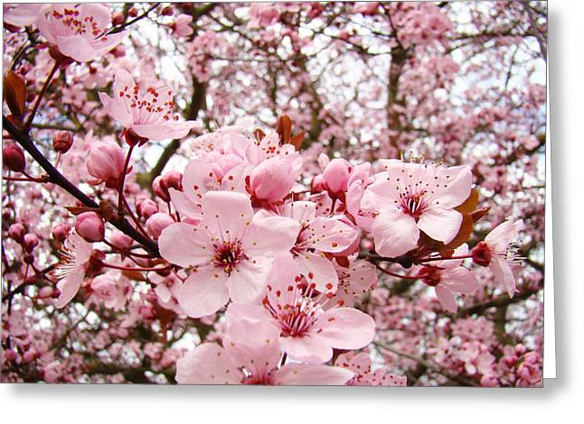 Blossoms Art Spring Pink Tree Blossom Floral Baslee Troutman Greeting Card by Baslee Troutman