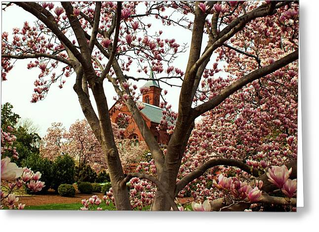 Blossoms At The Castle Greeting Card by Frank Garciarubio