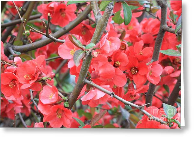 Blossoms Branches And Thorns Greeting Card by Carol Groenen