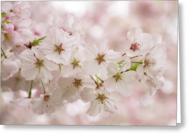 Blossoms Bright Greeting Card