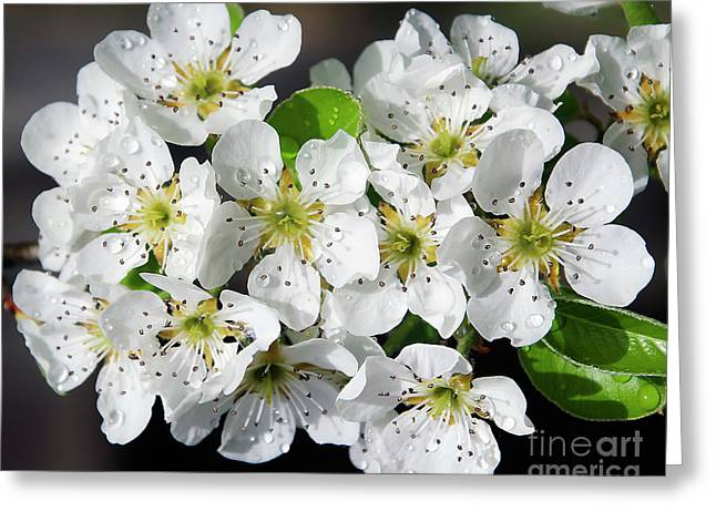 Greeting Card featuring the photograph Blossoms by Elvira Ladocki