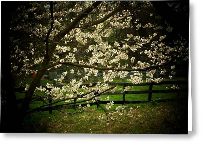 Blossoms Fence Greeting Card by Michael L Kimble