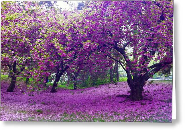 Blossoms In Central Park Greeting Card