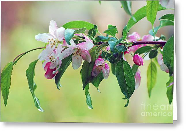 Greeting Card featuring the photograph Blossoms In Spring by Lila Fisher-Wenzel
