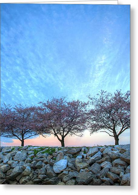 Blossoms Greeting Card by JC Findley
