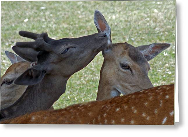 Blow In My Ear Greeting Card by Skip Willits
