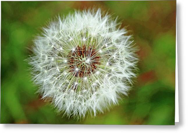 Blowballs Greeting Card by Debbie Oppermann
