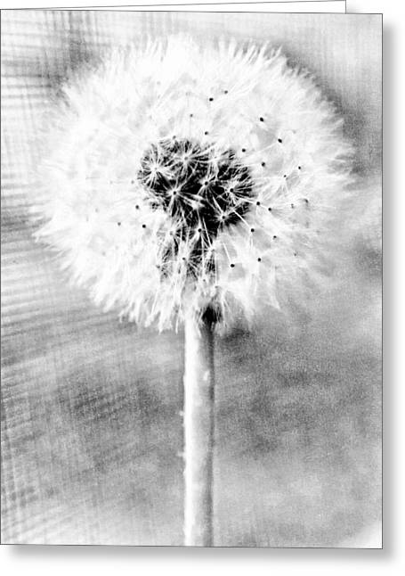 Blowing In The Wind Pencil Effect Greeting Card