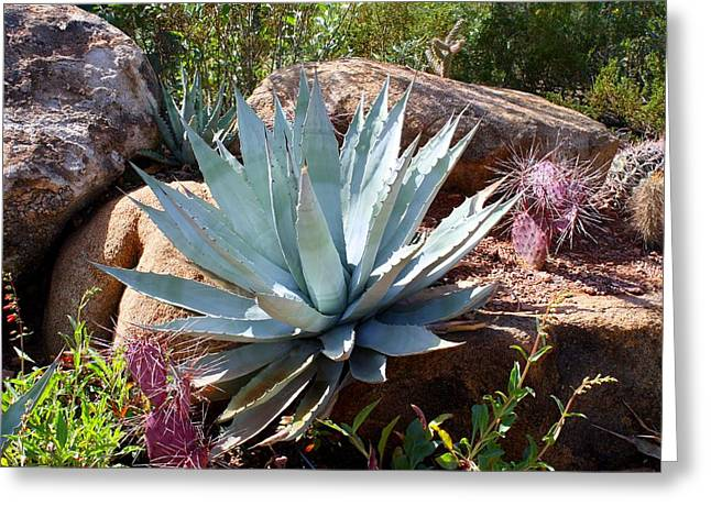 Greeting Card featuring the photograph Blue Agave by Kathryn Meyer