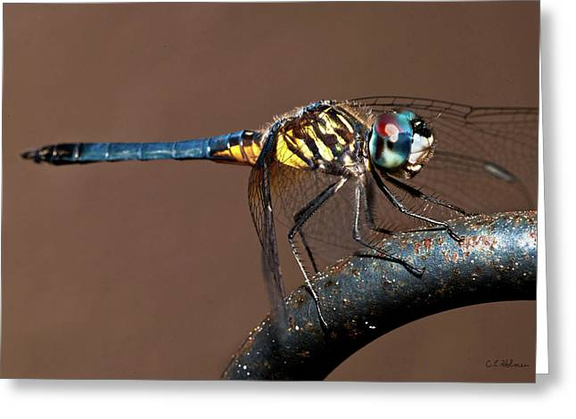 Blue And Gold Dragonfly Greeting Card by Christopher Holmes