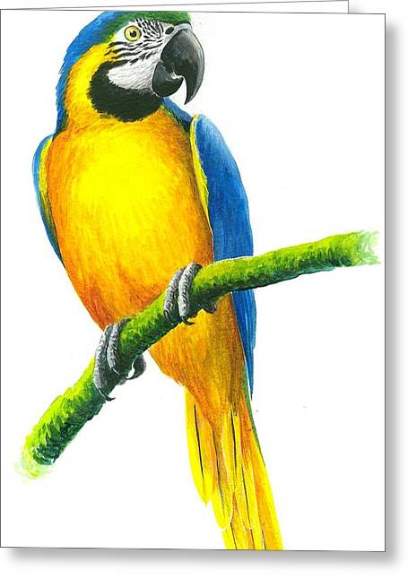 Blue And Gold Macaw Greeting Card by Christopher Cox