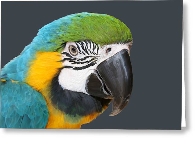 Blue And Gold Macaw Digital Freehand Painting Greeting Card by Ernie Echols