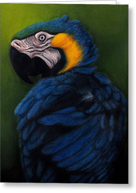Blue And Gold Macaw Greeting Card by Enaile D Siffert