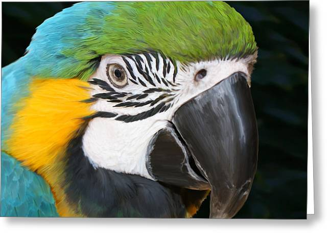 Blue And Gold Macaw Freehand Painting Square Format Greeting Card by Ernie Echols