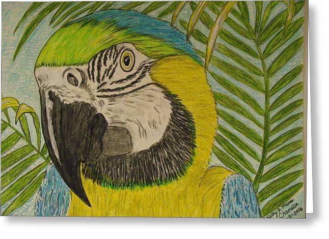 Greeting Card featuring the painting Blue And Gold Macaw Parrot by Kathy Marrs Chandler