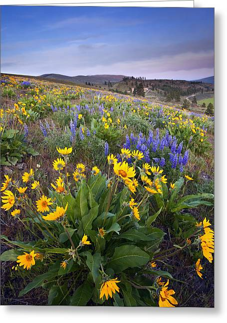 Blue And Gold Greeting Card by Mike  Dawson