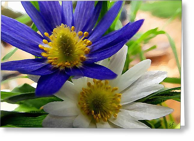 Blue And White Anemones Greeting Card