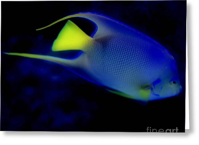 Blue And Yellow Fish Greeting Card by Kathleen Struckle