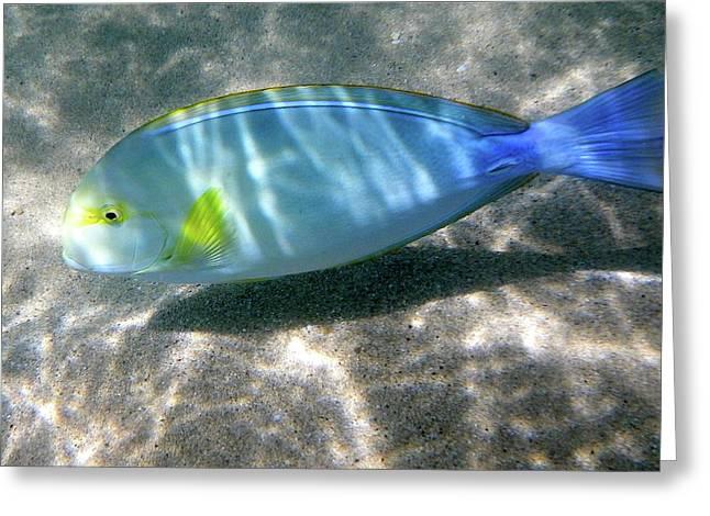 Blue And Yellow Hawaiian Reef Fish Greeting Card by Erika Swartzkopf