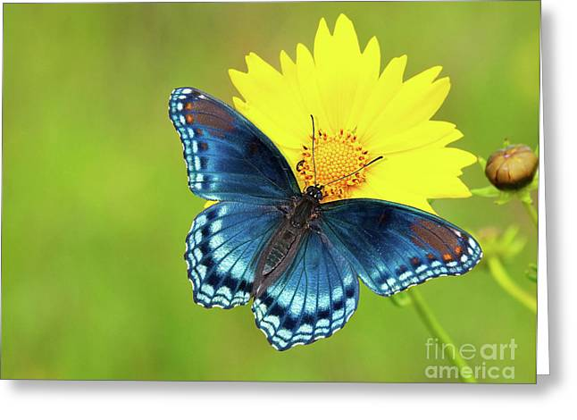 Blue And Yellow On Green Greeting Card