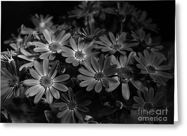 True Blue In Black And White Greeting Card by Dorothy Lee