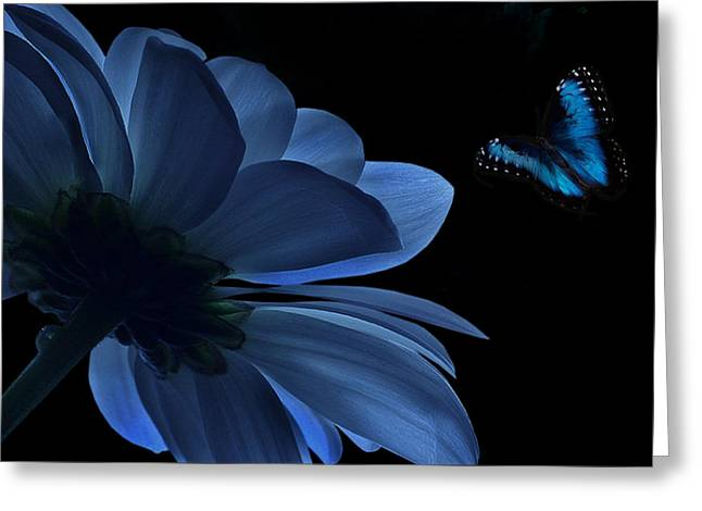 Blue Beauty Greeting Card by Marrissia Ruth