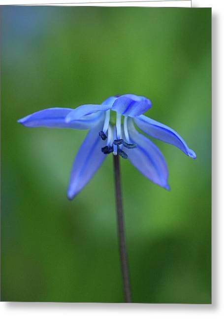 Jouko Mikkola Greeting Cards - Blue bell-like flower Greeting Card by Jouko Mikkola