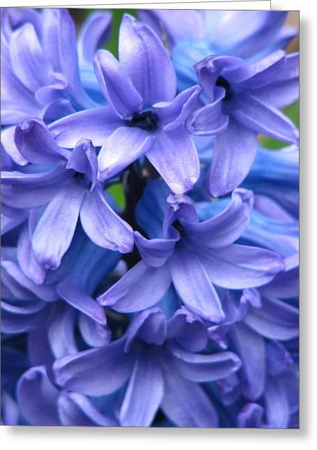 Blue Belles Greeting Card by Staci-Jill Burnley