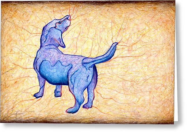 Blue Belly Greeting Card by John Terwilliger