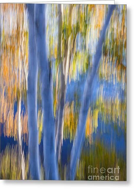 Blue Birches By The Lake Greeting Card by Elena Elisseeva