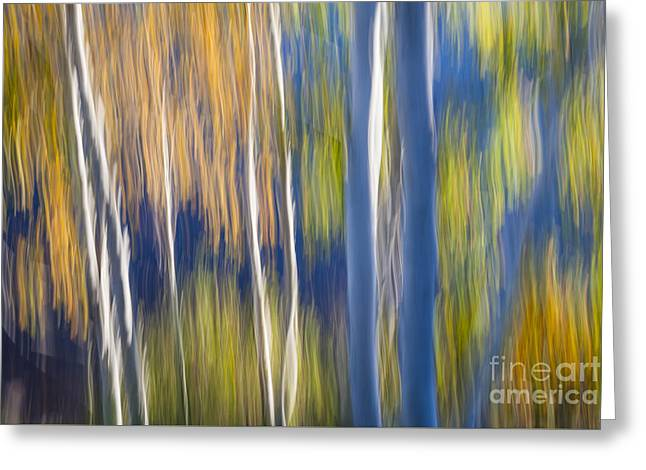 Blue Birches On Lake Shore Greeting Card by Elena Elisseeva