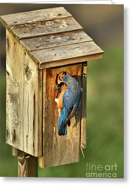 Mouthful Of Meal Worms Greeting Card