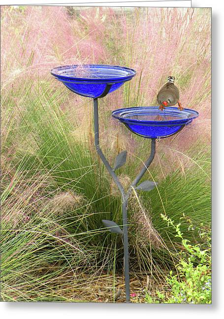 Blue Bird Bath Greeting Card by Rosalie Scanlon