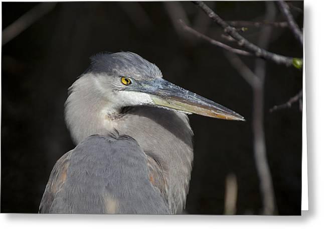 Blue Bird Greeting Card by Jon Glaser