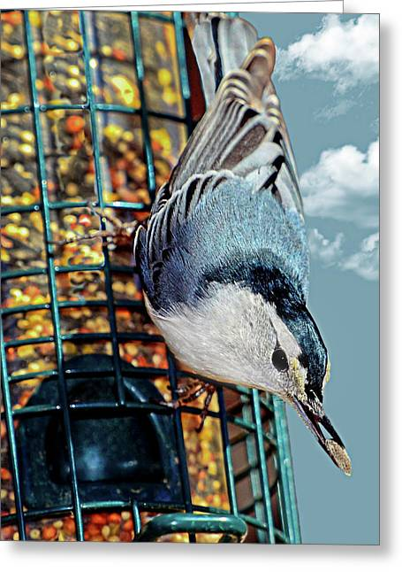 Blue Bird On Feeder Greeting Card