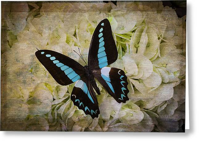 Blue Black Butterfly Dreams Greeting Card by Garry Gay