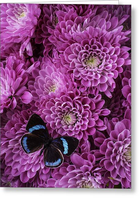 Blue Black Butterfly Greeting Card by Garry Gay
