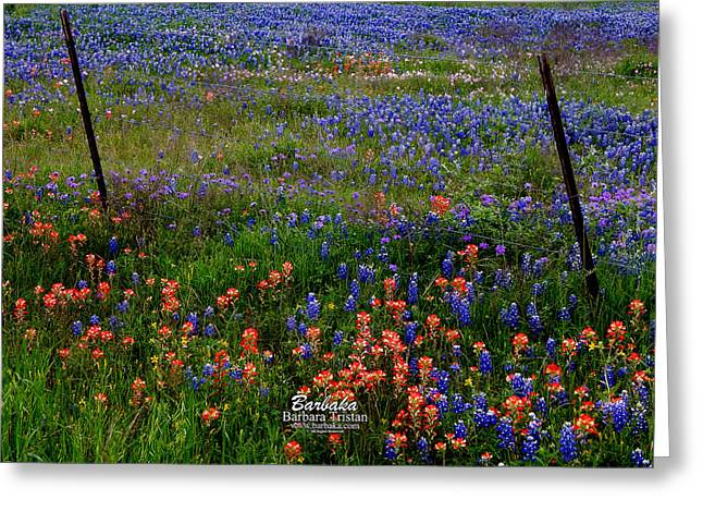 Greeting Card featuring the photograph Bluebonnets #0487 by Barbara Tristan