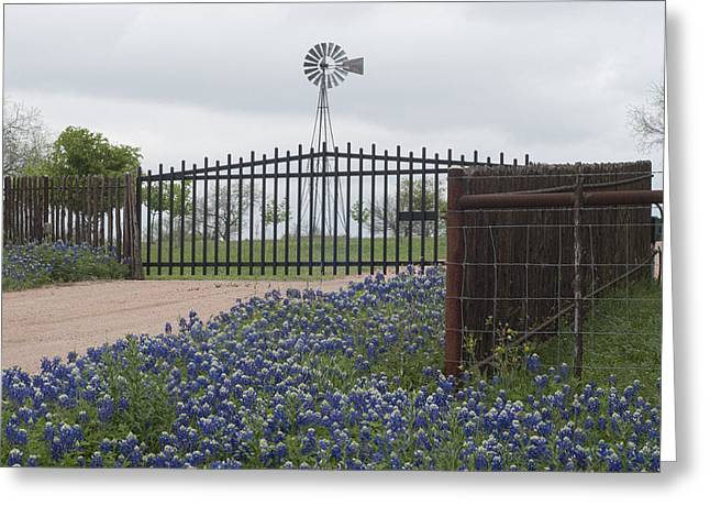 Blue Bonnets By Gate Greeting Card