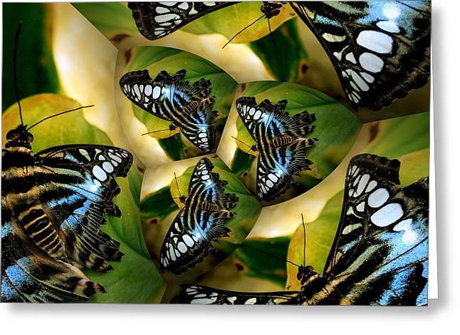 Blue Butterfly Collage Greeting Card by Irma BACKELANT GALLERIES