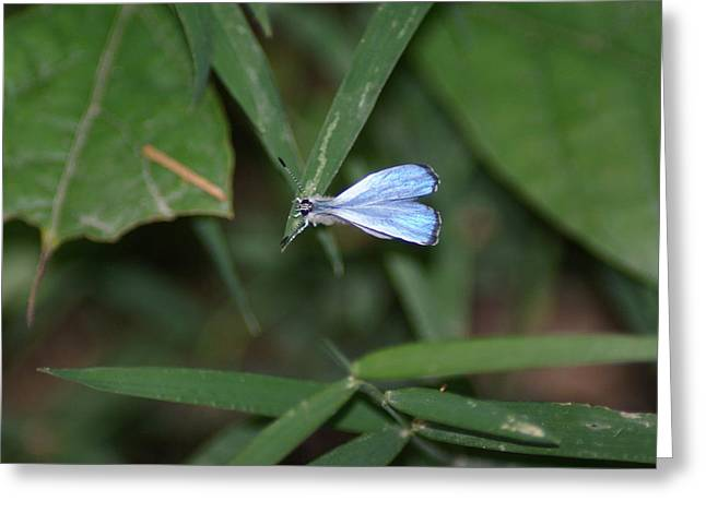 Blue Butterfly Greeting Card by Heather Green