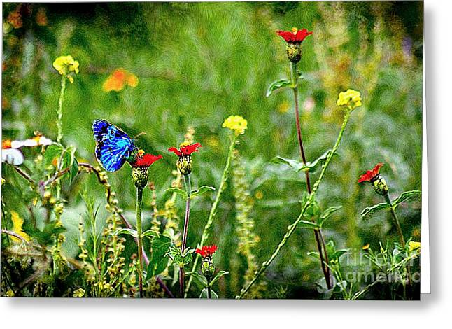 Blue Butterfly In Meadow Greeting Card by John  Kolenberg