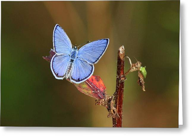 Blue Butterfly On Leaf Greeting Card