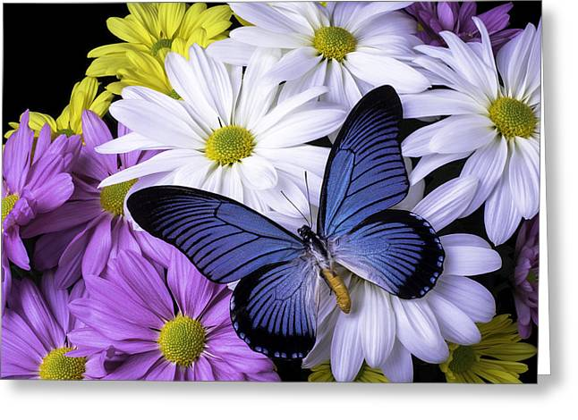 Blue Butterfly On Mixed Mums Greeting Card by Garry Gay