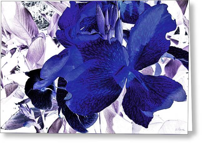 Blue Canna Lily Greeting Card by Shawna Rowe