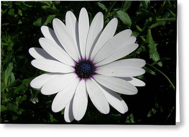 Blue Center Daisy Greeting Card by Valerie Ornstein