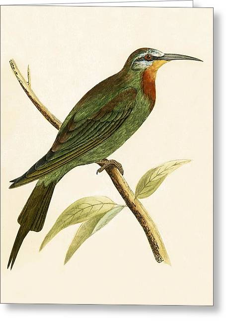 Blue Cheeked Bee Eater  Greeting Card by English School