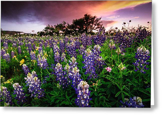 Bluebonnet Landscape Greeting Cards - Blue Greeting Card by Chris Multop